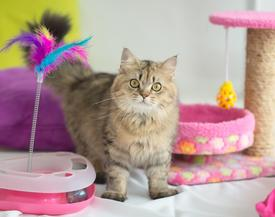 boarding cattery in colchester and essex